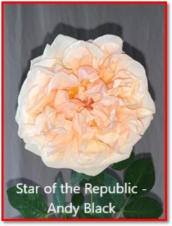 class 9 star of the republic andy black.