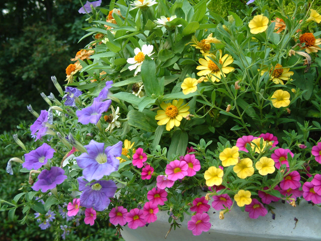 Seasonal color brightens the gardens and evolves throughout the seasons.