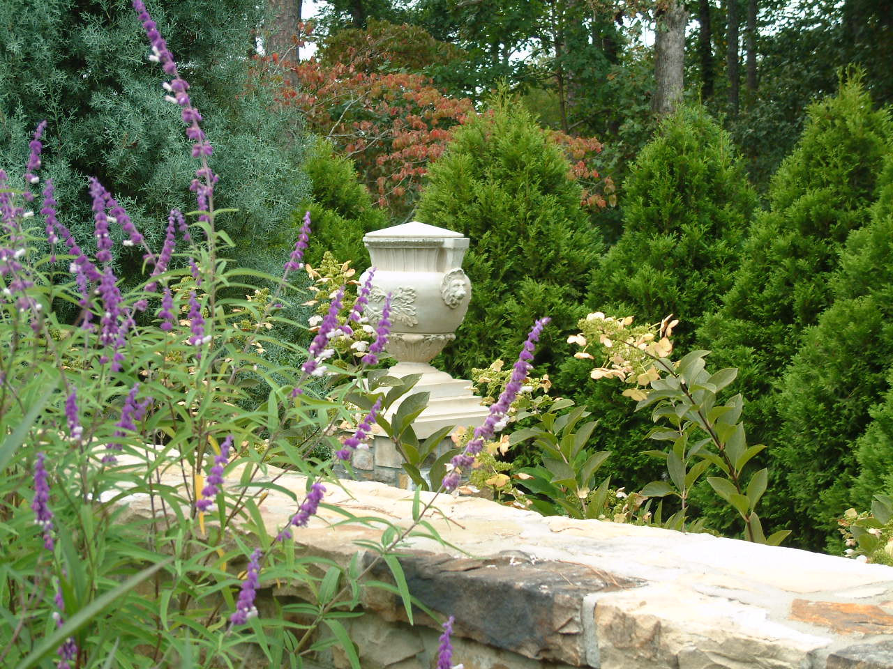 Through the salvia and hydrangeas, guests are welcomed to the gardens.
