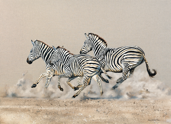 A6550605 Zebras galloping.tiff