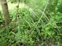 wild-oat-gaelle-roullet-nantes-redon.JPG