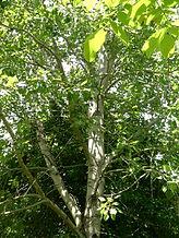 walnut-2-gaelle-roullet-nantes-redon.JPG