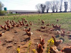 Producteur Bio en Bretagne