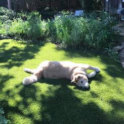 Willie has fun in the sun!