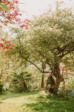 Bristol garden in the summer.jpg