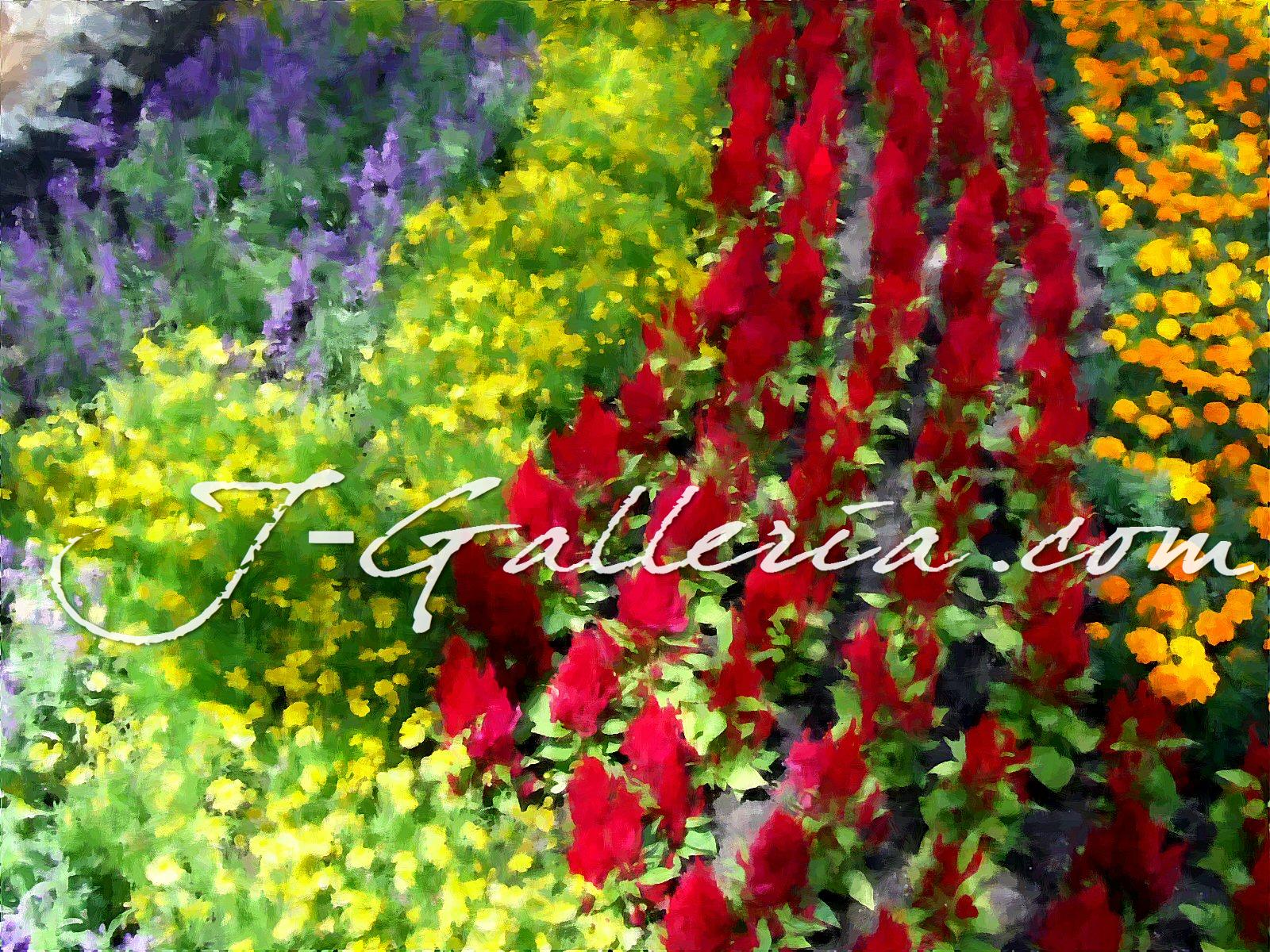 Field+of+Colors.jpg