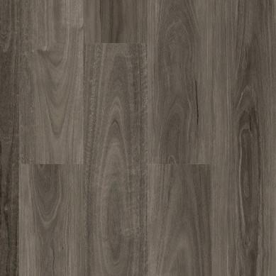 Roasted Spotted Gum