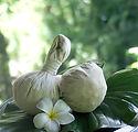 Mayan Herb.jpg