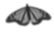 BW monarch 1.png