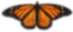 monarch2.png