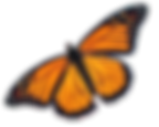 monarch4.png