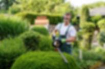 shrub-pruning.jpg