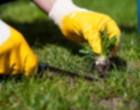 custom-lawn-care-weed-killer-1.jpg