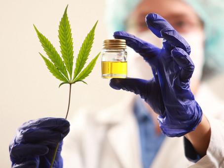 Avanza la iniciativa sobre regulación del uso medicinal de cannabis en provincia de Buenos Aires