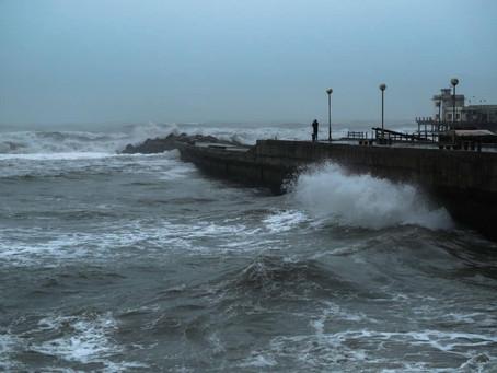 Mar del Plata | Fuertes vientos provocaron caída de árboles