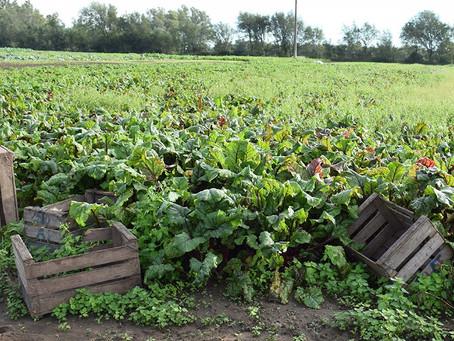 El Gobierno bonaerense aprobó proyectos hortícolas agroecológicos por $ 57,5 millones