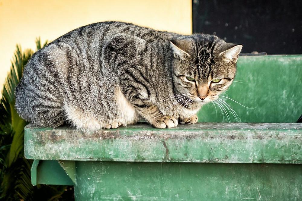 Imagen de archivo. Los especialistas reforzaron la recomendación de una domesticación responsable de los animales.