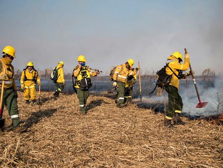 """Advierten que es """"critica"""" la situación de los incendios en el Delta por la sequía"""