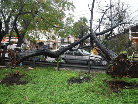 Chascomús | El temporal provocó caída de árboles y voladuras de techos