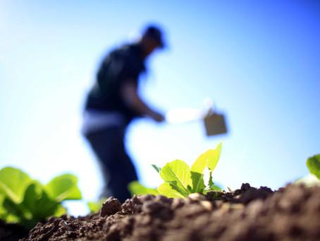 Proyecto bonaerense busca potenciar la agroecología y la producción sustentable