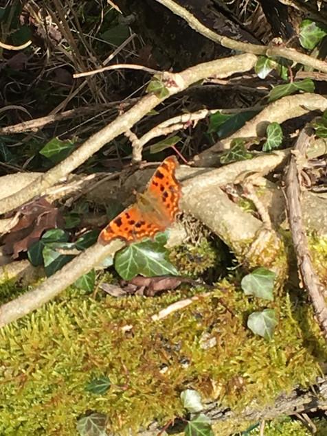 Butterfly and hazel logs