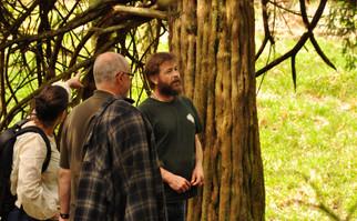 Tree lore in Killearn Glen