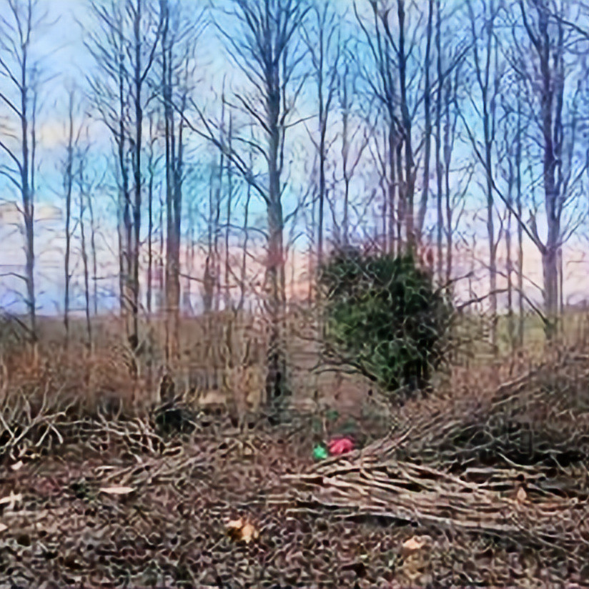 Introduction to coppicing with The Woodland Trust
