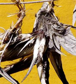 fugle gul pix