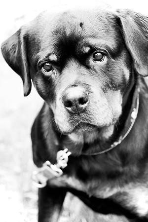 Detlef_Hund