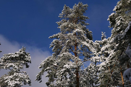 Dieter_Winter 3