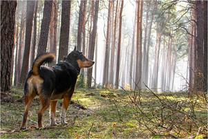 Jürgen_eine Hundenase findet immer den richtigen Weg