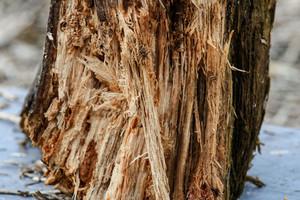 Ramona_abgebrochener Baum