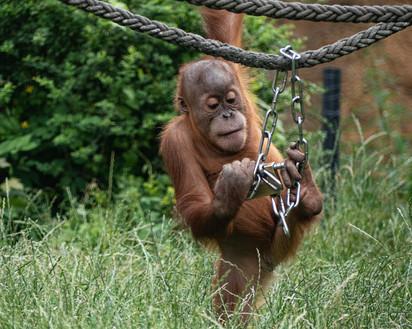 Exkursion Zoo Leipzig_Ramona_2