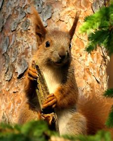 Dieter-Eichörnchen