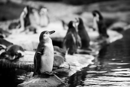 Bokeh_Christian_Pinguine