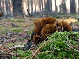 Ramona_Pilze im Wald