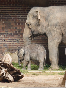 Exkursion Zoo Leipzig_Detlef_3