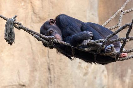 Exkursion Zoo Leipzig_Andreas_5