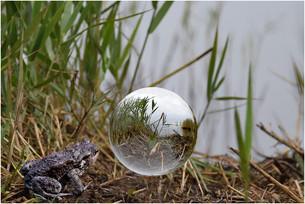 Jürgen_Glaskugel aus der Froschperspektive