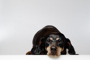 Christian_meine Hunde 1