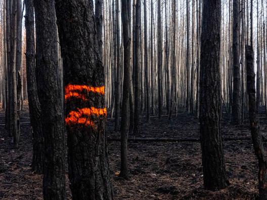 Ramona-Verbrannter Wald