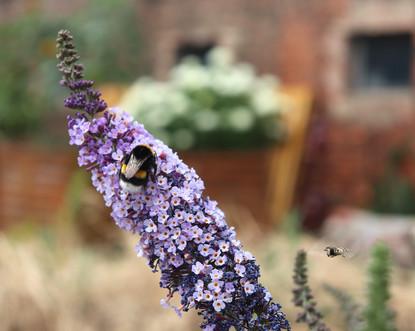Ines_meine Bienen