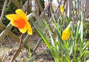 Ramona_Frühling 2.jpg
