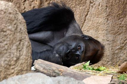 Exkursion Zoo Leipzig_Andreas_4