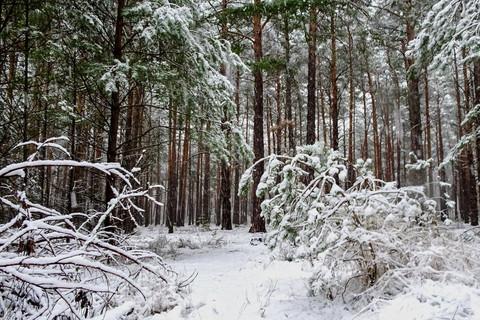 Jürgen_Winter in Borkwalde Januar 2021