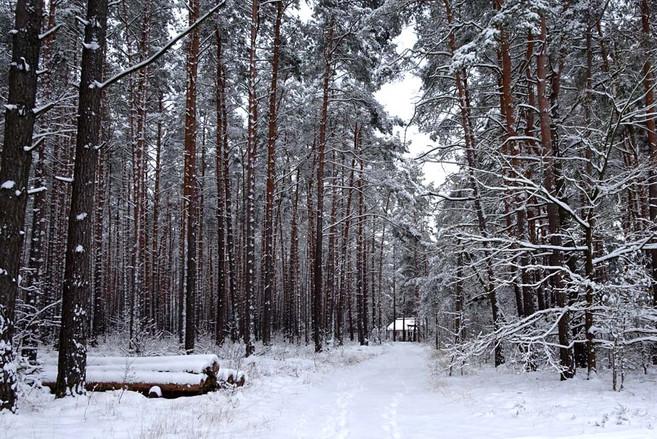 Jürgen_Winter 3