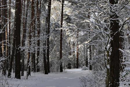Dieter_Winter 2