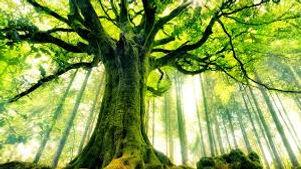 arbre.jpeg