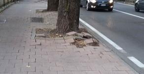 Più sicurezza e maggior decoro nei percorsi viabilistici della Città di Crema!