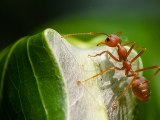 Bugs are Conscious Too!